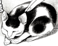 超音波睡猫.png