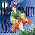 Helichrysum Moon