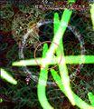 蛇符「Green Snake Come On」(天邪鬼).jpg