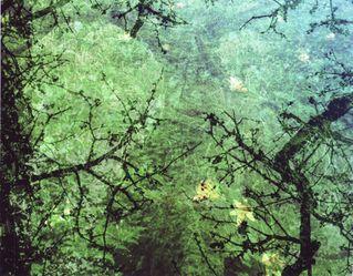 鸟船遗迹封面背景的森林